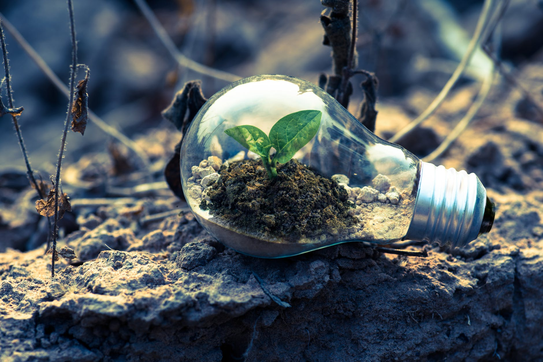 Light bulb lying in the forest with a plant growing inside the lightbulb
